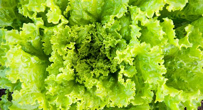 salat-demeter-hofgemuese