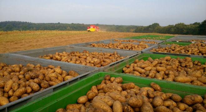 demeter-kartoffeln-2016